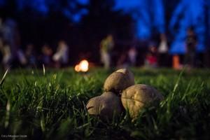 2019_ziemniaki-2
